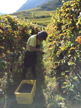 Sorting the grapes